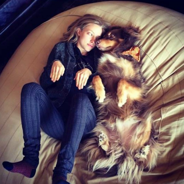 10 Reasons Why Amanda Seyfried's Dog Should Have His Own ...